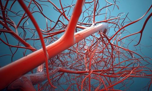 Укрепление кровеносных сосудов