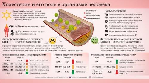 Роль холестерина в организме