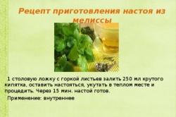 Рецепт настоя из мелиссы